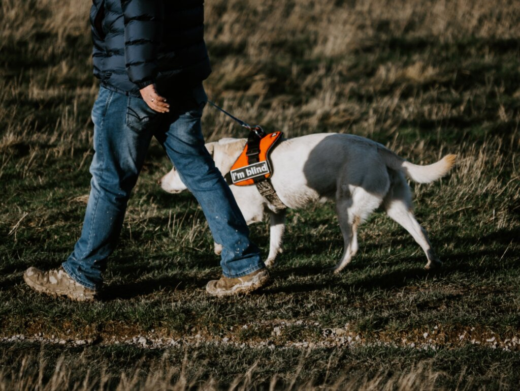 man walking with guide dog